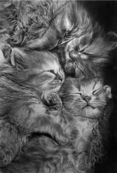 Cats - Pencil drawing by Paul Lung. °