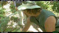 Andrew Whitehill helping Felidae check a trail camera in Marin County, CA