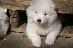 Castração de cães – Prós e Contras
