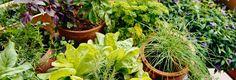 Consejos para garantizar una conservación y utilización  valiosa de hierbas.