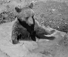 Post with 4206 votes and 139880 views. The Heart-Melting Story Of Wojtek, The Soldier Bear Wojtek Bear, Battle Of Monte Cassino, Poland Ww2, Cool Pictures, Cool Photos, Italian Campaign, Animal Magic, Second World, North Africa