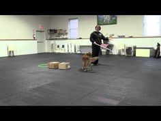 Trick Tuesday - Trick Tutorials - Teach your dog some jumping skills