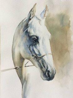 Original Animal Painting by Yuriy Ivashkevych Watercolor Horse, Watercolor Portraits, Watercolor Painting, Watercolors, Horse Drawings, Art Drawings, Akhal Teke, Equine Art, Horse Art