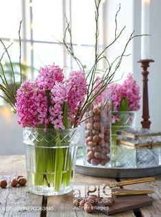 kytice hyacintů rozvoní celý byt Pink hyacinths in vase Spring Flowers, Cool Pictures, Glass Vase, Sweet Home, Home Decor, Nice, Garden, Plants, Gatos
