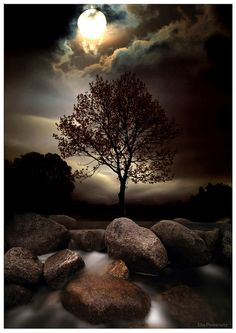 *Lone tree in moonlight