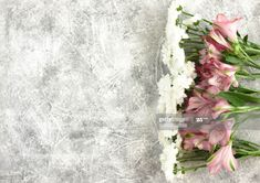 Stock Photo : Greeting card frame with white chrysanthemum and pink and white Alstroemeria flowers border on grey background White Chrysanthemum, Any Images, Gray Background, Still Image, Royalty Free Images, Floral Wreath, Greeting Cards, Invitations, Stock Photos