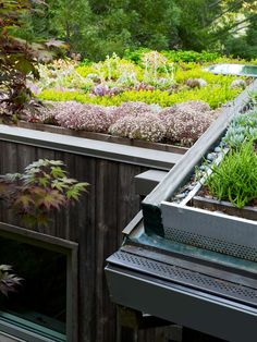 Green Roof and Landscape Architecture - Jori Hook Mill Valley Cabins