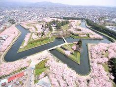 【五稜郭】函館|箱館戦争の舞台となった特別史跡五稜郭跡には、約1600本の桜が植えられていて、星形の城郭一面に咲き誇る。見頃時期は5月上旬から中旬。シーズン終盤には、堀の水面が花びらで覆い尽くされ、開花時とはひと味違った趣が味わえる。