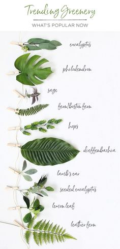 Greenery is on trend! Decorate your home and fill your wedding bouquets and centerpieces with artificial leaves from Afloral com, including eucalyptus, tropical leaves, ferns, hops and more is part of Wedding flowers greenery - Deco Floral, Floral Design, Tropical Leaves, Tropical Flowers, Green Flowers, Artificial Plants, Artificial Bouquets, Artificial Wedding Flowers, Floral Wedding
