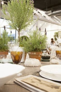 Herb potted plants (Lavender or Rosemary) instead of flowers