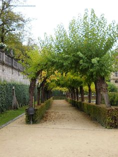 The garden of the residence palace