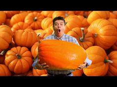 Návod na přípravu dýňového pyré a dýňového koření (pumpkin spice) - KULINÁŘSKÝ PODZINMNÍ FESTIVAL!! - YouTube Korn, Spikes, Fall Recipes, Pumpkin, Vegetables, Autumn, Youtube, Cnd Nails, Pumpkins