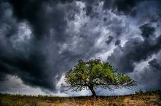 by Csaba Daróczi Tree Photography, Tree Branches, Art Pieces, Clouds, Outdoor, Beautiful, Naturaleza, Outdoors, Artworks