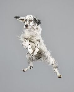 Photos of dogs floating in mid-air will make your day » Lost At E Minor: For creative people
