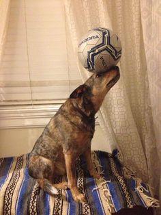 Jack the Balancing Dog