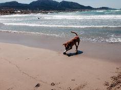 #plage