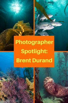 In an ongoing series, we'll chat with prominent and up-and-coming underwater photographers. Today we chat with Brent Durand. Underwater Photographer, Underwater World, Ocean Life, Scuba Diving, Travel Inspiration, Around The Worlds, Photographers, Adventure, Pictures