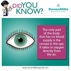 The only part of the body that has no blood supply is the cornea in the eye. It takes in oxygen directly from the air. This is why over wearing your contacts can cause serious problems, you are depriving the cornea of oxygen. Eye Facts, Cool Glasses, Eye Glasses, Eye Exam, Healthy Eyes, Human Eye, Eye Strain, Medical Information, Optician