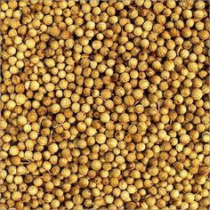 HOQUE MERCANTILE from Kolkata, West Bengal (India) is a manufacturer, supplier, trader and exporter of Coriander Seeds at the best price. Coriander Seeds, Dog Food Recipes, Organic