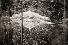 Living Architecture: Tomás Saraceno's Cosmic Spider Webs Propose an Alternative to Human Structures An artist trained as an architect, Tomás Saraceno deploys insights from engineering, physics,...