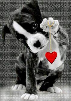 Animação animals -gif birthday images, happy birthday wishes Animals And Pets, Baby Animals, Funny Animals, Cute Animals, Boxer Love, Cute Kittens, Tier Fotos, Birthday Images, Happy Birthday Wishes