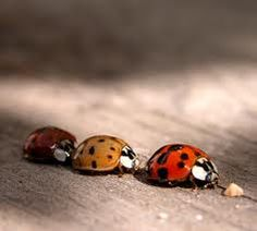 """Oliver loved ladybugs, which he used to call """"leggabug""""."""