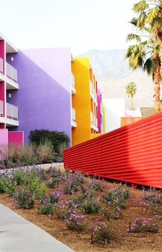 At the Saguaro Palm Springs, the foliage is just as much the star as the colorful hotel. http://design-milk.com/milkweed-color-fields-the-landscape-of-the-saguaro-palm-springs/