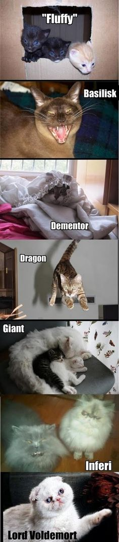 i like the dragon and voldemort the best:
