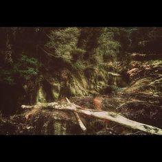 【katada_shinji】さんのInstagramをピンしています。 《【fallen tree】  #landscape #風景 #shadow #陰影 #forest #森林 #rock #岩 #river #川 #fallen #fallentree #倒木 #weed #雑草 #green #緑 #miyazaki #宮崎 #japan #日本 #picture #photo #写真 #effect #加工 #follow #Instagood #webstagram #写真好きな人と繋がりたい》