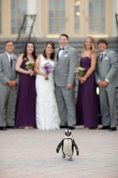 Looks like Tails stole the show. #WeddingsatMDZoo