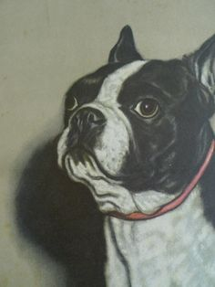 boston terrier print gladys emerson cook lithograph by cozystudio, $75.00