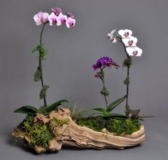 Orchids on Driftwood