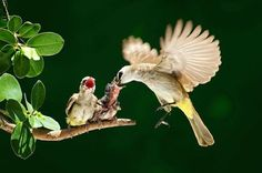 17 Bird Mothers with Their Chicklings