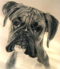 how to draw a boxer dog face