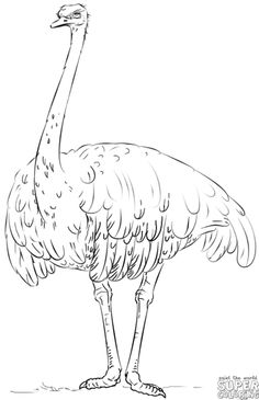 How to draw a realistic ostrich | Step by step Drawing tutorials