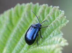menta imagini – Căutare Google Eggplant, Google, Eggplants