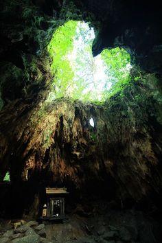 屋久島の縄文杉コースの途中にあるウィルソン株は、大きな屋久杉の切り株。その内部に入ることができ、あるポイントから空を見上げるとハート型に見えることでとても人気があります。 by daiki