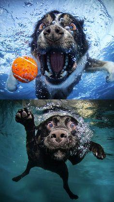Pets Gracinhas de Seth Casteel, fotógrafo famoso por clicar bichos. #1