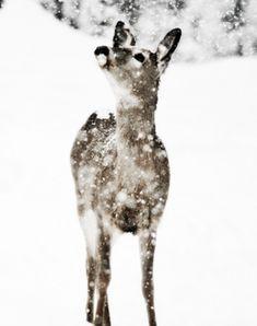 Les Merveilles D'Hiver / Winter Wonderland