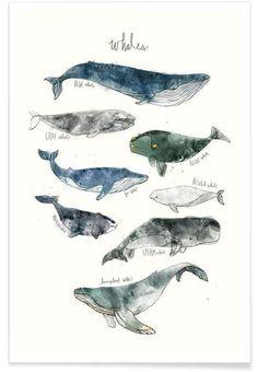 Whales als Premium Poster von Amy Hamilton   JUNIQE