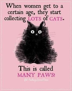But I've always had lots of cats since I was a kid. But I've always had lots of cats since I was a kid. But I've always had lots of cats since I was a kid. But I've always had lots of cats since I was a kid. Funny Cats, Funny Animals, Cute Animals, It's Funny, Cats Humor, Funny Horses, Funny Cat Quotes, Cat Sayings, Pet Quotes