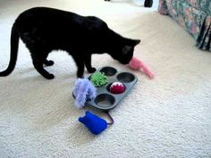 Allegra and the Muffin Tin Game - What a great idea for indoor cats! Place treats in tin, cover with toys and watch the cat figure it out! From consciouscat.net