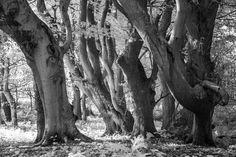 John Muir Country Park #6 by CCullen #ErnstStrasser #Schottland #Scotland