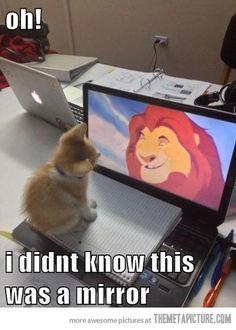 This made me laugh out loud. #catsarehilarious!