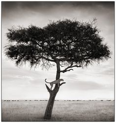 Mesmerizing Black & White African Wildlife Photography by Nick Brandt
