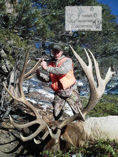 Timber Mountain Outfitters Elk - 430 gross score off of Panguitch Lake Unit in Utah, Timber mountain outfitters is AMAZING!! Go to their site and look threw all pictures.. you'll have to pick your jaw up!