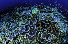 coral reef photography