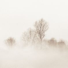 Landscape Paintings and photographs : fog and winter trees Over The Garden Wall, Pretty Pictures, Mists, Art Photography, Beautiful Places, Scenery, Outdoor, Winter Trees, Inspiration