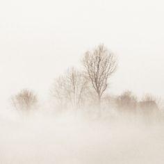 pale mist