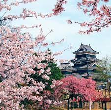 japonské zahrady - Hledat Googlem